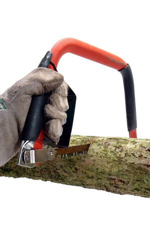 crosscut: Lumberjack hand wearing a protective glove holding a hack saw tool equipped with a specialized blade with sharp teeth to cut a lumber wood log over white Stock Photo
