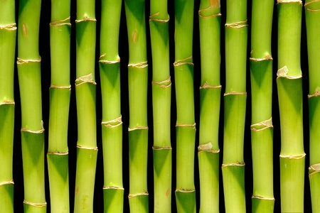 Bamboo green plant stems background with slight inward perspective over black   photo