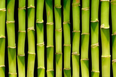 Planta de bambú verde proviene de fondo con ligera perspectiva interna sobre negro   Foto de archivo - 10263201