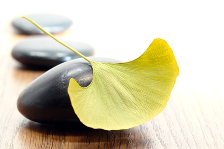 Ginkgo biloba leaf on hot massage polished stone in a spa Stock Photo