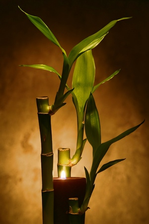 ambiance: Burning aromatherapy candle within bamboo stems and green leaves for a relaxing Zen meditation ambiance in a spa Stock Photo