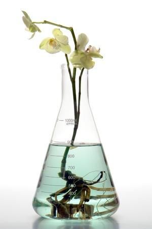 nutrientes: Flor de orqu�dea hidrop�nicos con ra�ces creciendo dentro de un vaso de laboratorio de ciencia matraz Erlenmeyer lleno de verdes nutrientes y minerales soluci�n l�quida