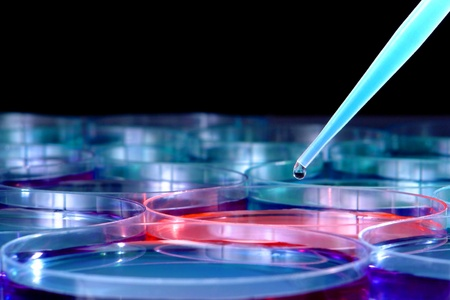 assay: Pipette with drop of blue liquid above scientific laboratory Petri dishes with one filled with pink eosin chemical media solution for a biological experiment in a science research lab Stock Photo