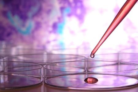 プラスチック製のピペット、液体と新興科学研究室での生物学実験のためのペトリ皿上化学溶液のドロップ赤でいっぱい 写真素材