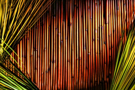 earthy: Asian inspired earthy brown bamboo sticks and reeds background with natural Eastern wild grass in dramatic lighting