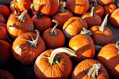 Fall harvest festival decorative and colorful orange pumpkins on display for sale at a country farm stand Stock Photo - 10966525