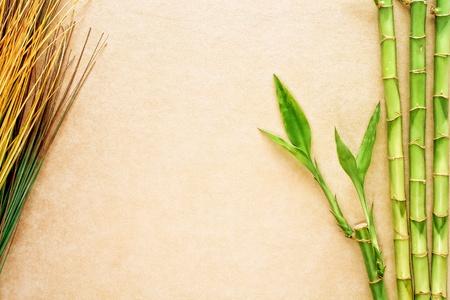 野草: アジア促された青竹植物茎と柔らかいベージュ革上東野草装飾テクスチャ表面グランジ背景