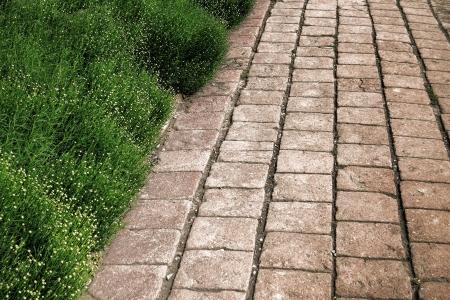 adoquines: Antiguo y degradado de ladrillo adoquines callej�n caminar con seto verde planta de la vegetaci�n en un huerto casero hist�rico