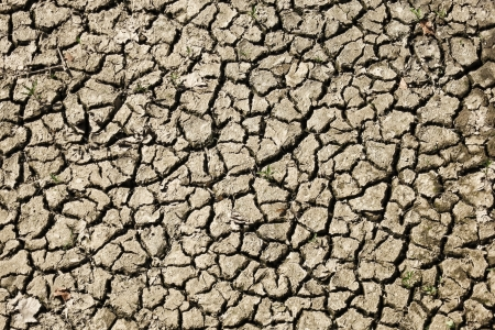 cracked earth: Dry and scorched earth planting surface on a farmland agriculture field with eroded dried cracked soil dirt during a severe drought