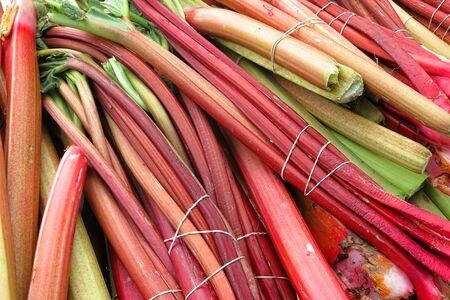 rheum: Rhubarb plant fresh raw stalk stem vegetable bundles for sale at a farmer market produce stand  Stock Photo