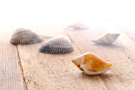 soft diffused light: Mollusk seashell and scattered bivalve seashells Stock Photo