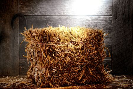 old wood floor: Bale of straw hay on wood aged floor in an antique and dusty old wooden barn with weathered walls on a farm or a ranch lit by diffused hazy light