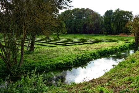 berros: Berro hoja verde campo de cultivo de hortalizas listos para recoger antes de la cosecha con el canal de riego en la Francia rural