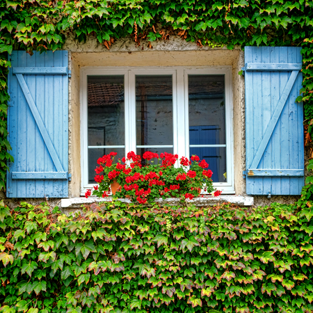 planter: Old house window with red geranium planter and blue wood shutters on building wall covered with overgrown green vine in a quaint French village in France