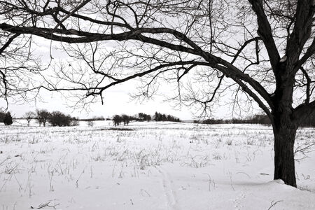 Leafless tree over an empty field covered with winter snow at Valley Forge National Historical Park military camp of the Continental Army near Philadelphia in Pennsylvania