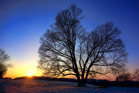 Sunset over big old tree and fields in winter snow at dusk at Valley Forge National Historical Park military camp of the Continental Army near Philadelphia in Pennsylvania  photo