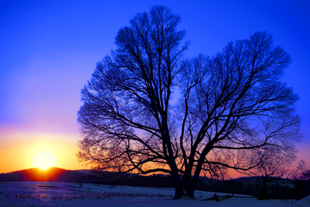 Big old lone tree and snowy fields in winter snow at sunset before dusk at Valley Forge National Historical Park military camp of the Continental Army near Philadelphia in Pennsylvania photo