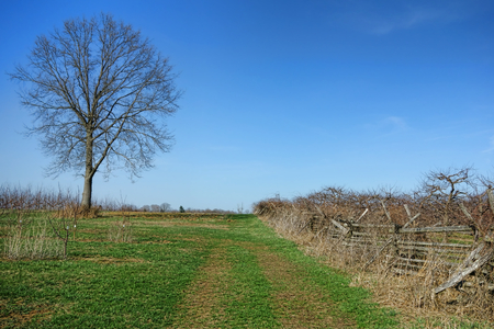 Scenic landscape with big old leafless tree and historic field tour trail along fenced hedgerow near Battleview Orchards at the American revolutionary War historic Monmouth Battlefield State Park in New Jersey