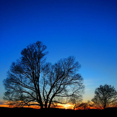 forge: Big leafless bare tress silhouette against scenic deep blue evening sky with warm orange sunset afterglow at dusk at Valley Forge National Historical Park