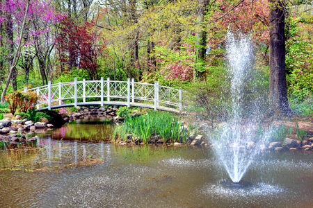 garden fountain: Sayen Park Botanical Garden picturesque scenic water spout fountain over ornamental gardens pond and impressionist bridge with colorful flowering springtime trees in the spring in Hamilton Square in New Jersey