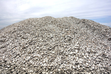 clam gardens: Pile of crushed pieces of oyster shells and bivalve clam clamshells used for driveway and garden landscaping