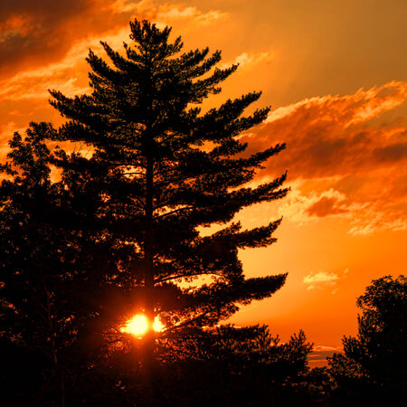 Intense and bright warm sun glowing and shining over a cloudy orange sundown sky through a large pine tree at sunset