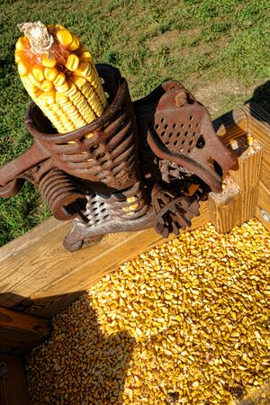 inserted: Antique corn sheller hand operated machine with inserted cob over separated loose kernels in vintage wood receiving bin