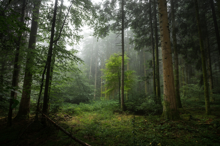 undergrowth: a clearing in the forest