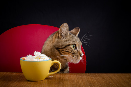 A cat head that protrudes above a table with a bowl full of cream chantilly Zdjęcie Seryjne