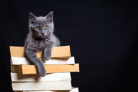 黒い背景と本の山の上に座って小さな灰色の猫