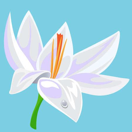 nymphaea: Vector illustration of  a waterlily