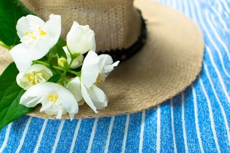 Summer hat and white jasmine flower on a blue striped background.