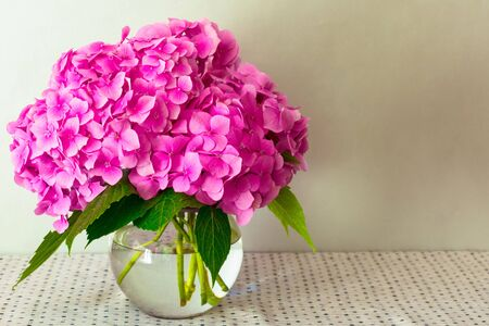 A bouquet of pink Hortensia in a vase on the table. Close-up.