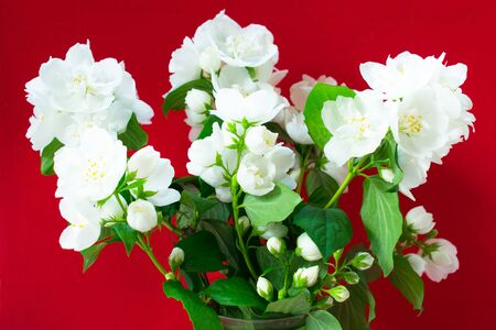 Bouquet of white jasmine in a vase on a red background.