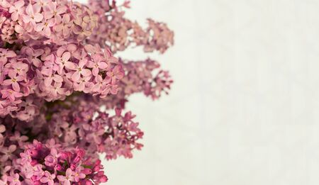 Branches of tender pink lilacs on a white background. Copy space.