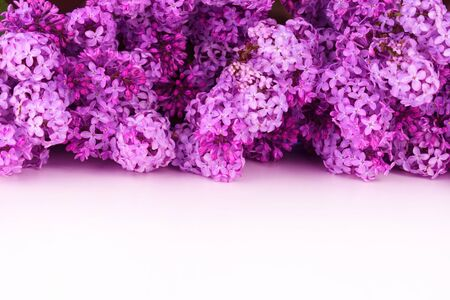 Beautiful lilac flowers on a white background. Copy space. Фото со стока