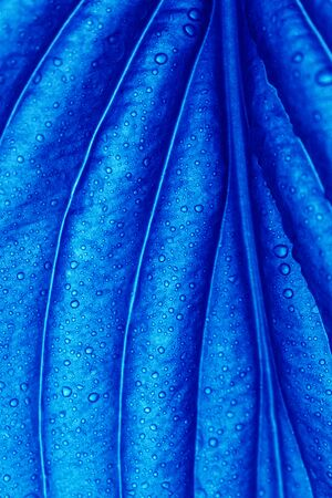 The texture of the sheet in the light painted blue. Creative background.