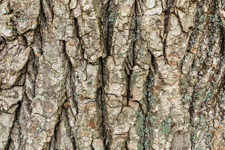 Embossed tree bark background. Tree bark texture.