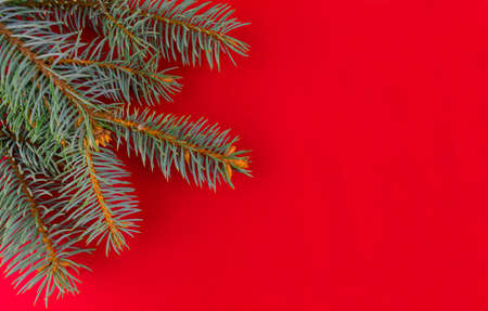 Branches of a Christmas tree on a red background. Copy space. Stock fotó