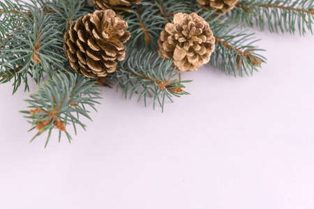 Golden pine cones on a branch of a Christmas tree on a white background. Christmas background. Copy space.
