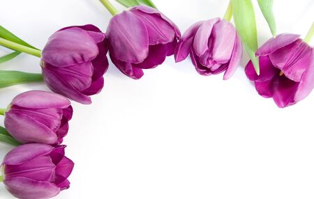 isolated photo of the six purple tulips