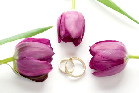 isolated photo of purple tulips and rings