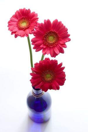 pink flowers isolated on white Stock Photo