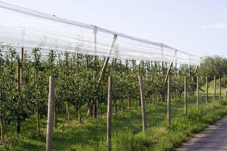 Kijk op de appel boom gaard.