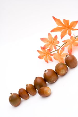 composition of brown acorns isolated on white photo