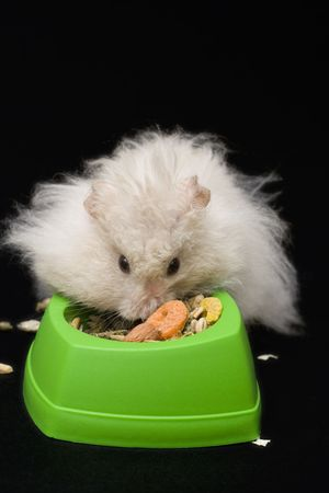 beige teddy bear hamster eating from green bowl photo