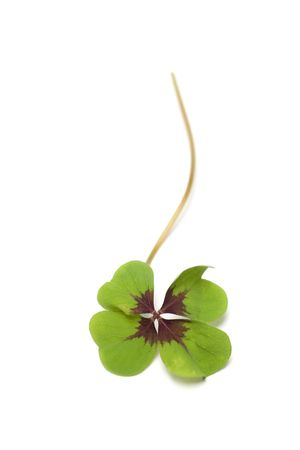 fortunateness: four - leaf clover isolated on white