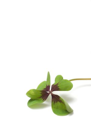 four - leaf clover isolated on white Stock Photo - 2866377