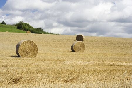 Hay bales drying in the field at harvest time. Stock Photo - 3510767