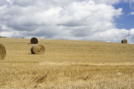 Hay bales drying in the field at harvest time. photo